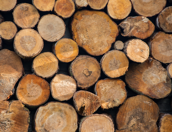INDUSTRY - Forestry Corporate Website.jpg