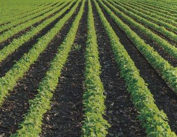 field-crops.jpg